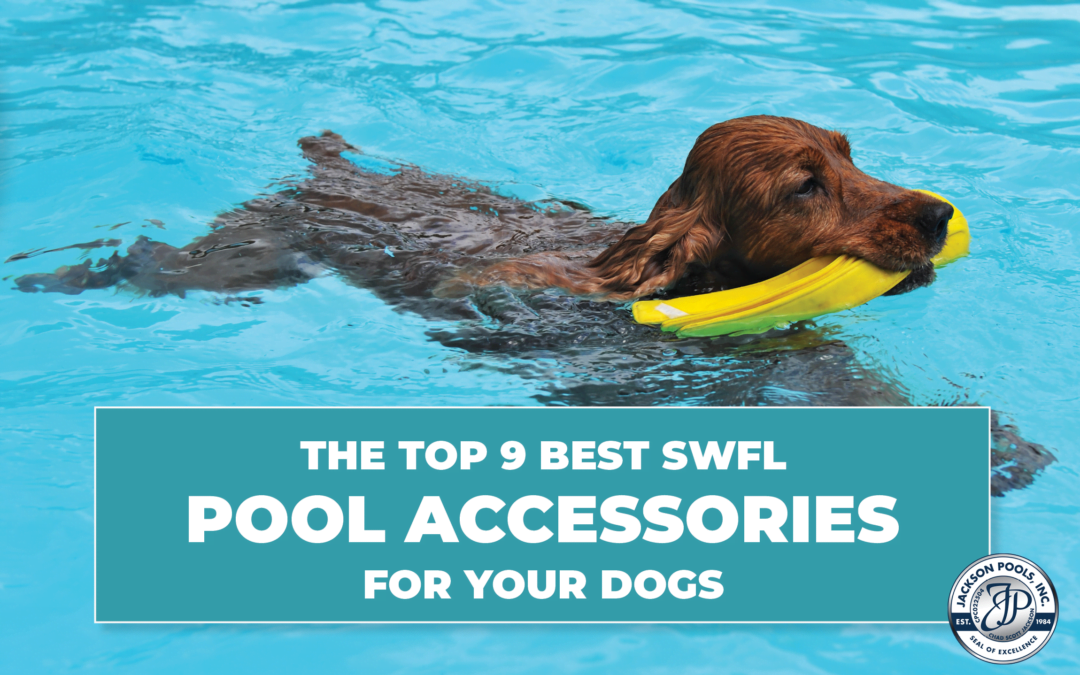 The Top 9 Best SWFL Pool Accessories For Your Dog